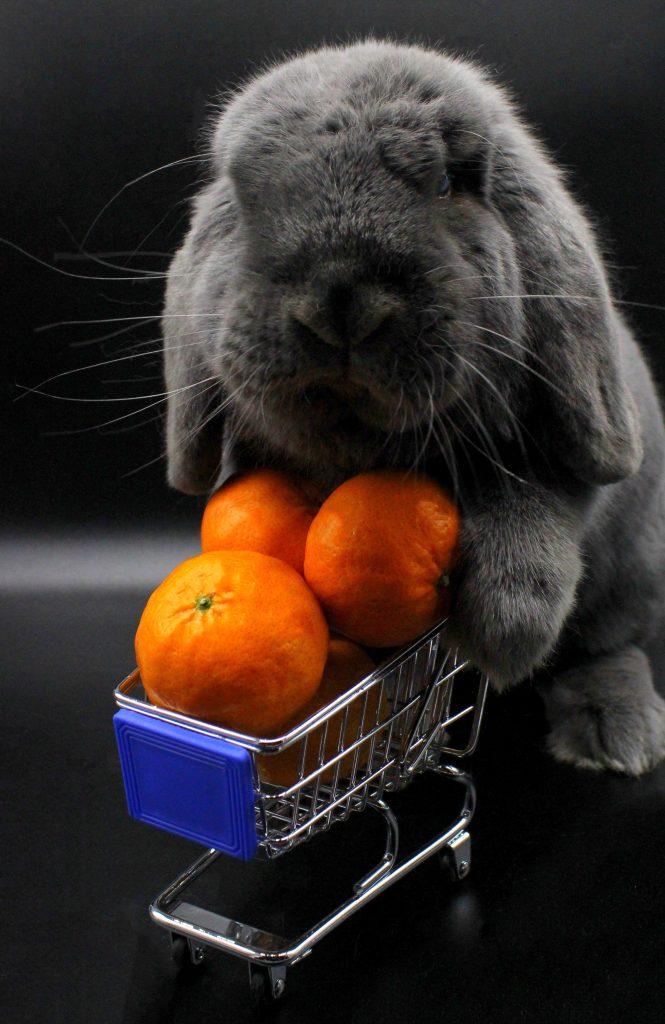 Grey bunny pushing a shopping cart full of mandarins