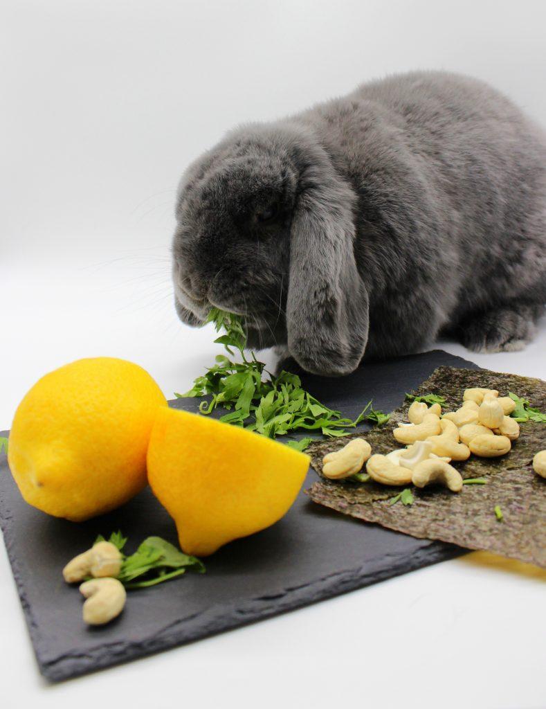 Grey bunny eating parsley