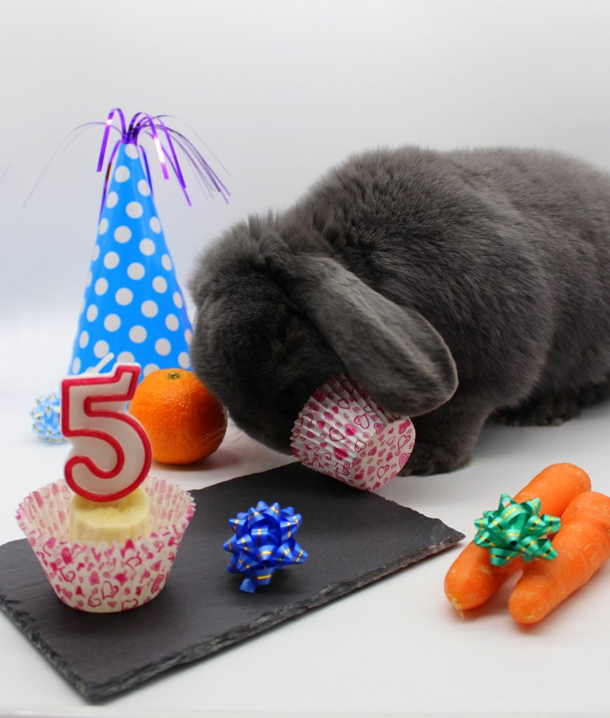 Grey bunny celebrating his birthday