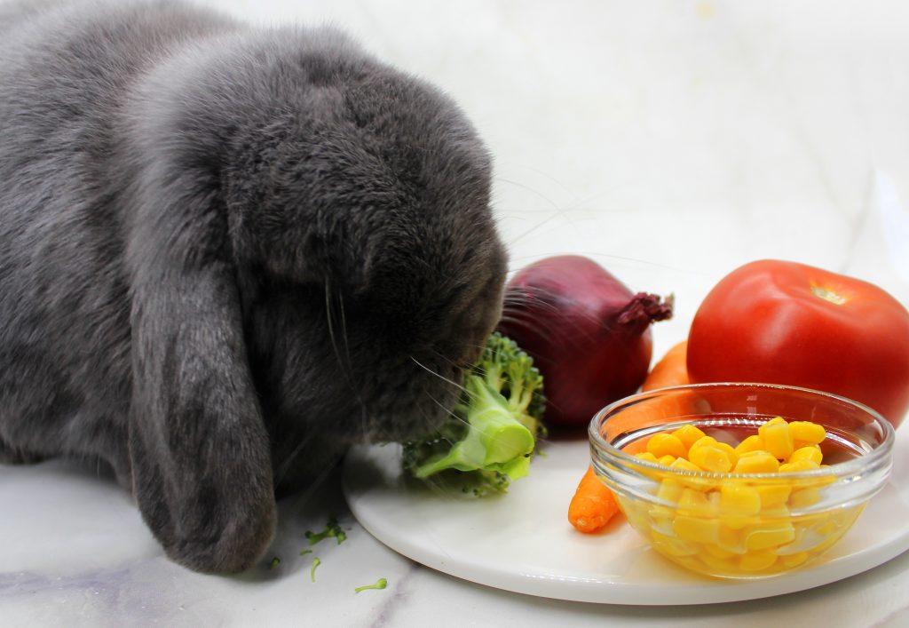 A bunny eating a broccoli
