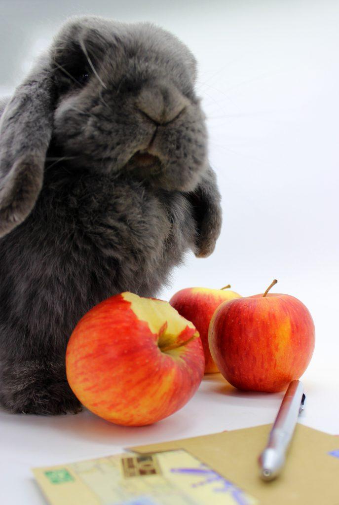 Bunny eating an apple
