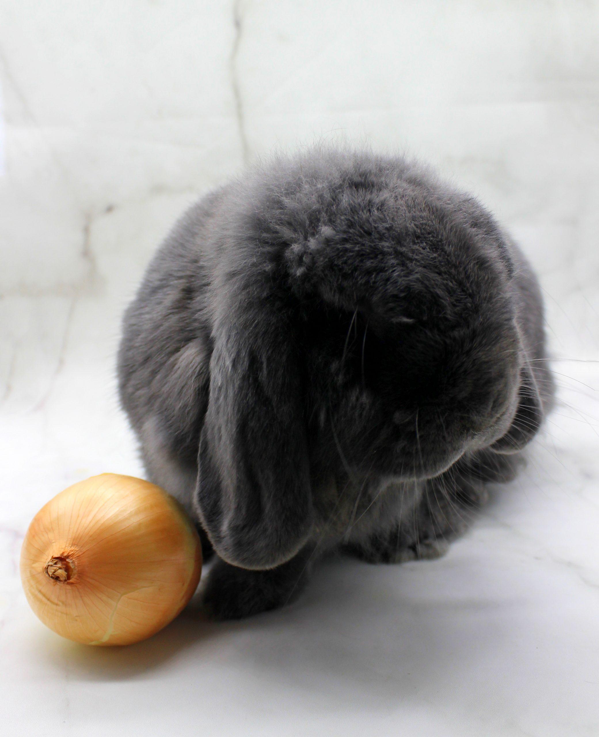 Cute bunny and an onion